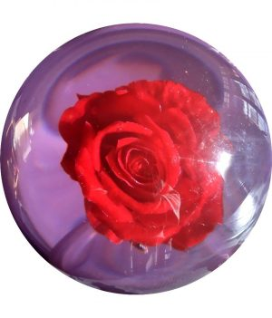 Rose Clear (Transparente)