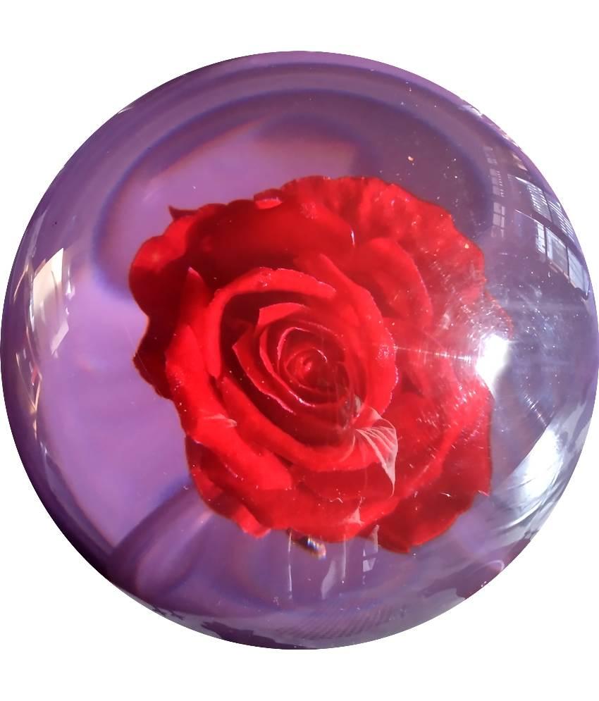 Rose Clear (Transparente)